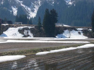 田んぼの雪があと少しになりました