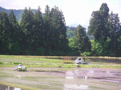 朝から田植えが行われています