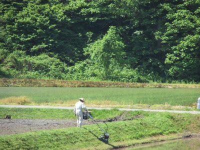 田んぼで草刈りが行われています