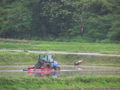 田んぼで代掻き作業が行われています
