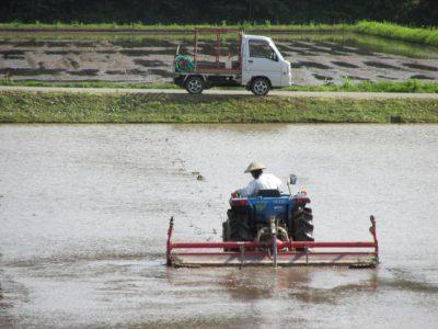 トラクターによる代掻き作業