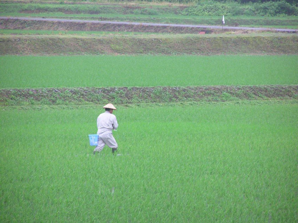 雨の中で肥料撒きをしている人