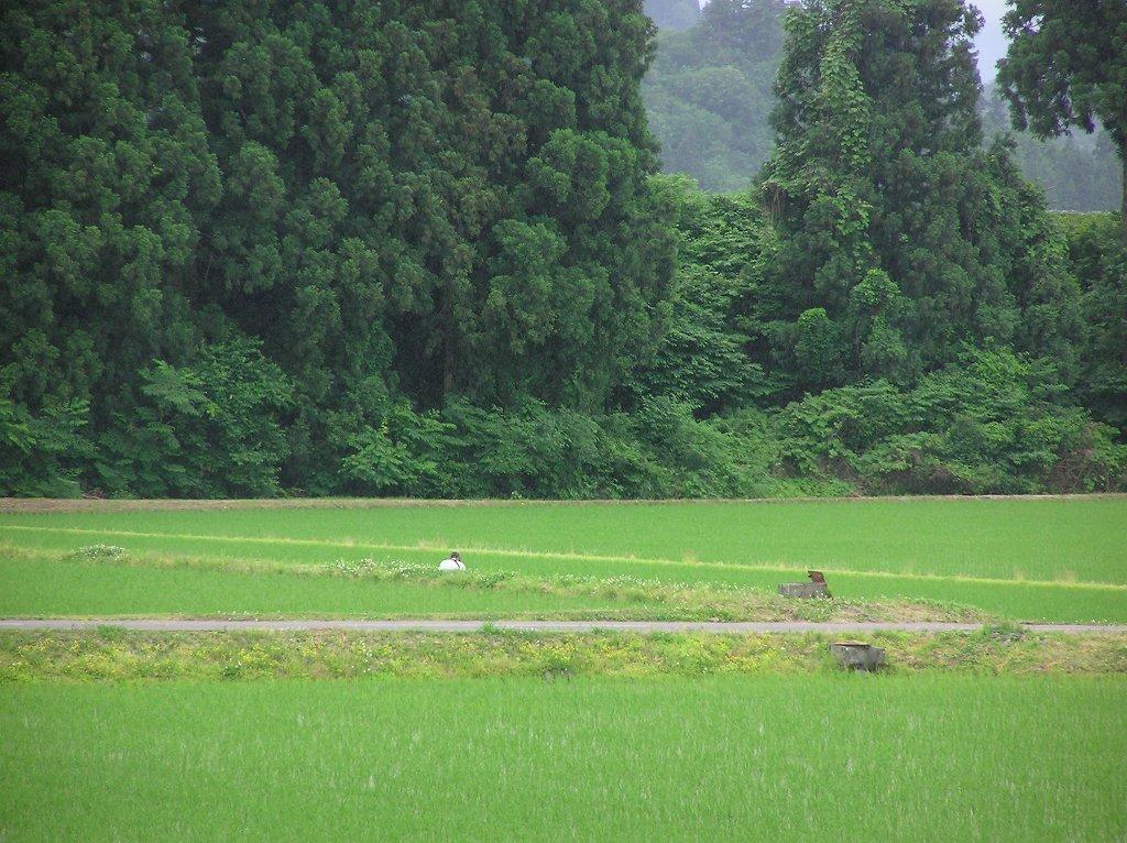 田んぼの畔の草刈り作業