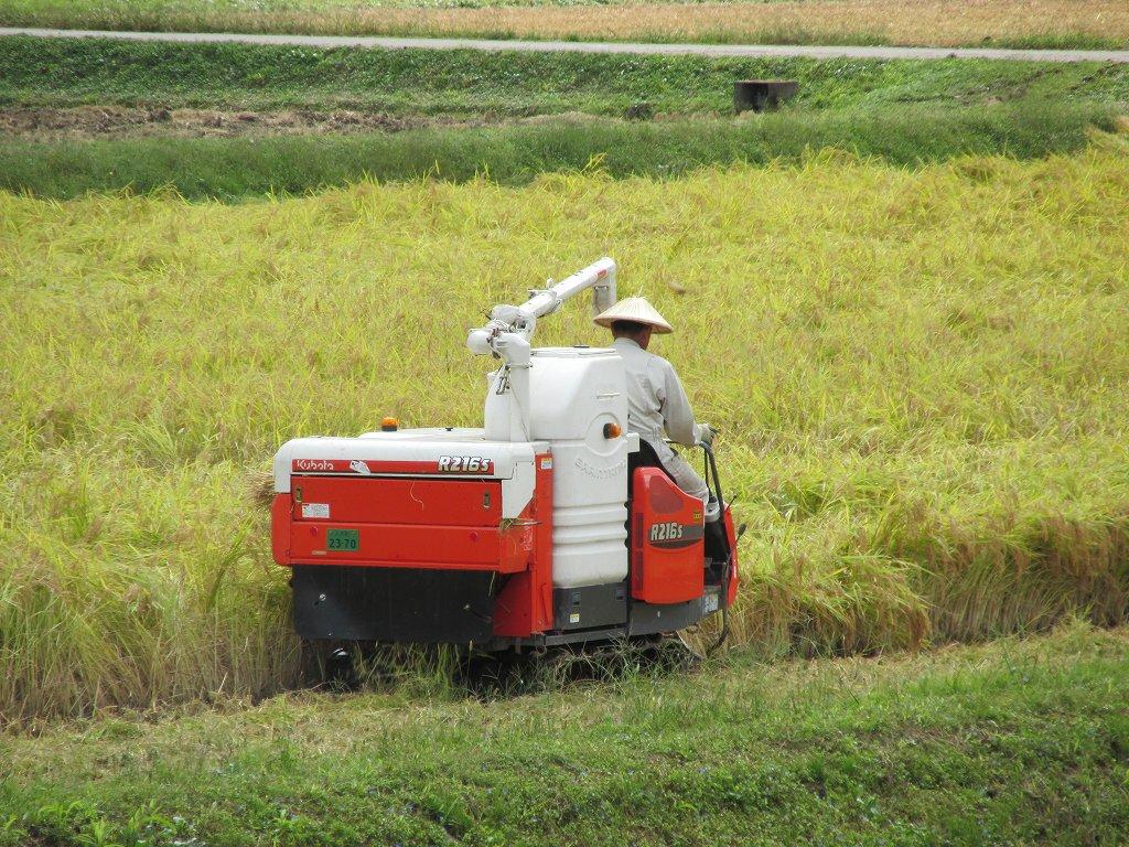 魚沼産コシヒカリの稲刈り作業が行われています